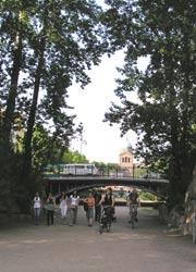Pappeln an der Waldemarbrücke