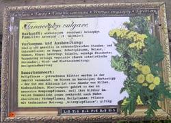 Pflanzenportrait