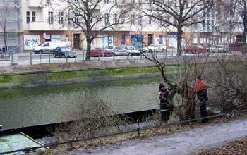 Strauchrodung Paul-Lincke-Ufer