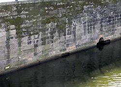 Steilmauer Planufer