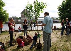 Obstbaum-Pflanzung