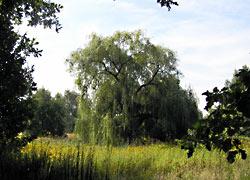 Spektewiesen 03