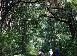 Durch urigen Laubwald