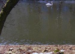 Rodungen Paul-Lincke-Ufer