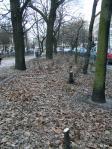 Grimmstraße 03