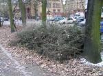 Grimmstraße 05