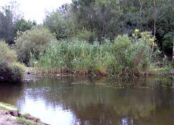 Kreuzberger Sumpf