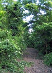 Schotterbett im Flaschenhals-Wald