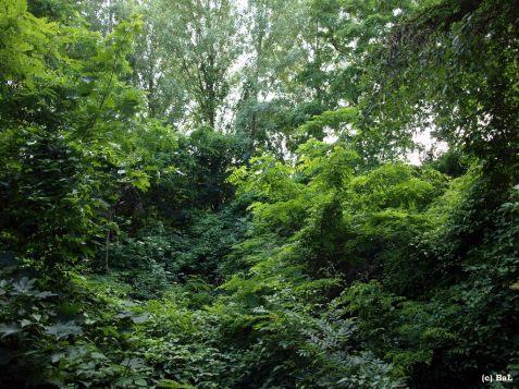 Stadtwald auf dem Flaschenhals