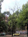 Lederhülsenbaum 325, Urbanstr. 25