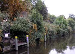 Ökologisch wertvoller Uferabschnitt