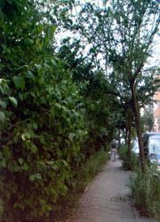 Bautzener Straße