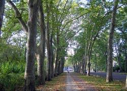 Gartendenkmal Puschkinallee