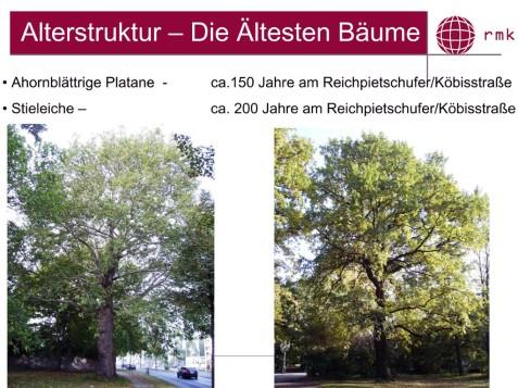 Die ältesten Bäume am Landwehrkanal