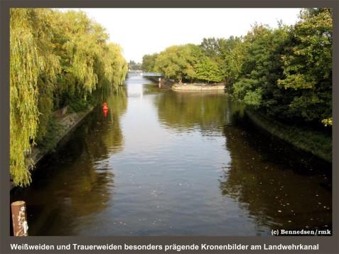 Bennedsen/rmk Weiden-Bilder