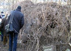 Gefahrenzone Wildkirschbaum