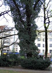 Biotop-Baum