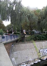 Hängeweide an der Baerwaldbrücke