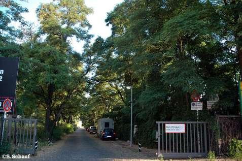 Privatstraße mit Robinien-Allee