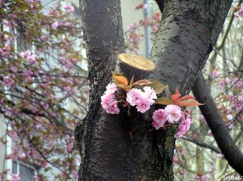 Xhainer Frühlingsgruß
