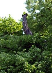 abgedeckter Biotopbaum
