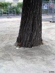 Baumscheiben-Fail