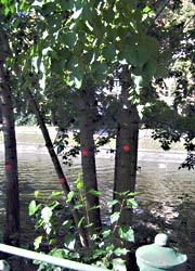 Rot markiert am Maybachufer
