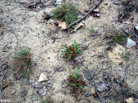 Trockenrasen-Biotop