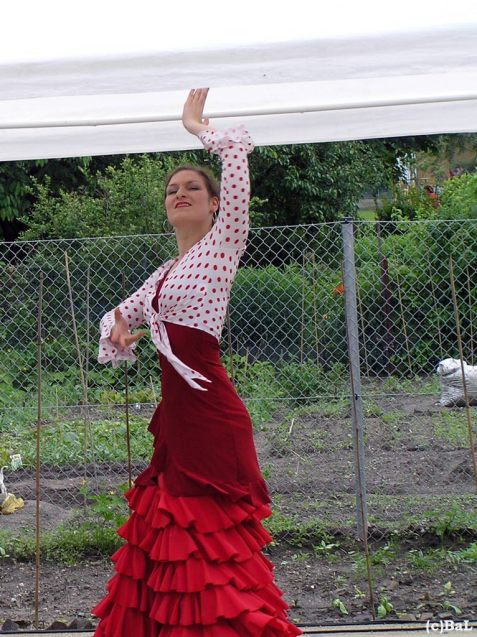 Flamenco in Kleingartenkolonie