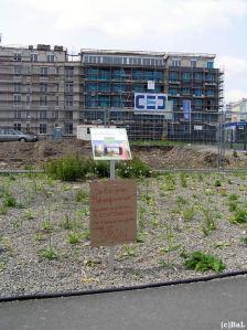 Protest gegen Baufeld