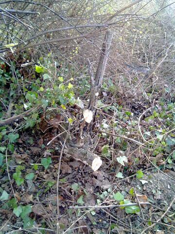 Büsche kappen im Kl. Tiergarten