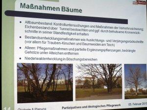 Maßnahmen Bäume