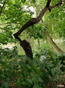 Biotopholz