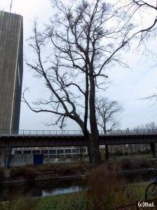 Tempelhofer Uferlinde 124