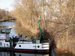 Baumpflege vom Hubsteiger am Salzufer